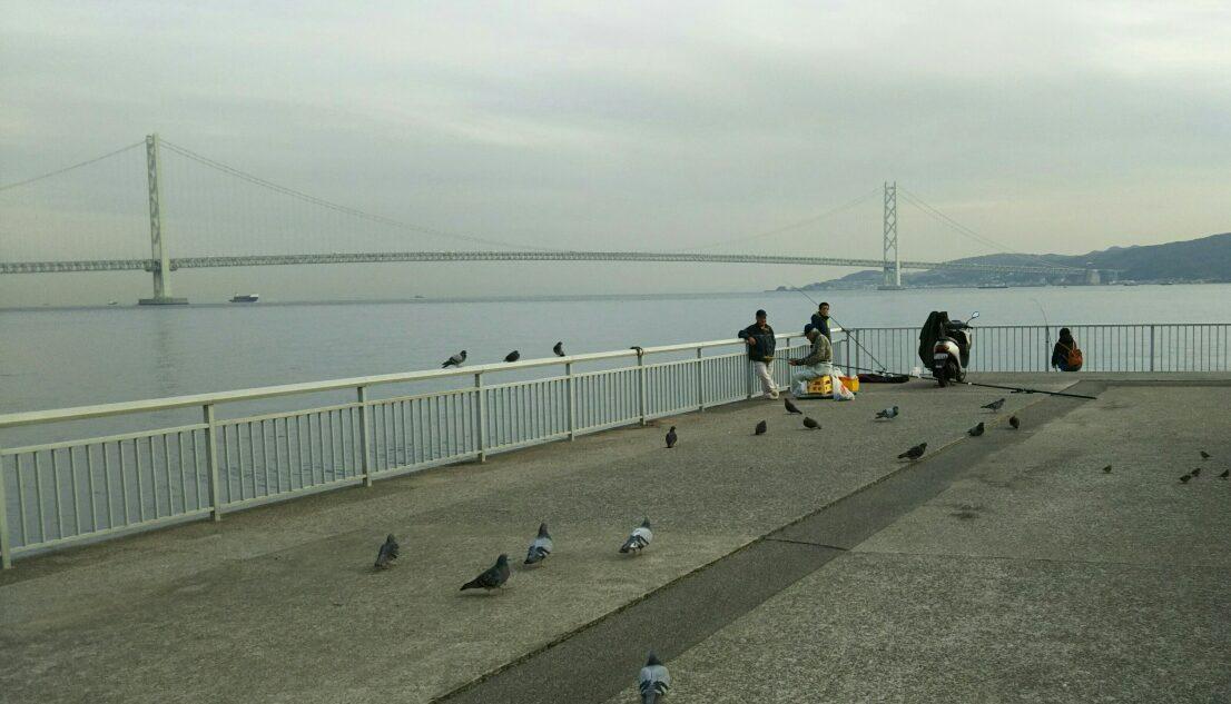 明石海峡大橋 釣 鳩